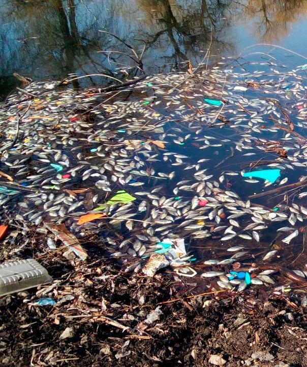 Организация проведения общественных обсуждений, общественных слушаний относительно решений в сфере охраны окружающей среды                                                                             - Фото №3