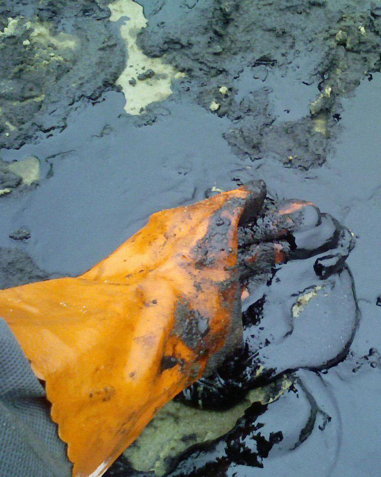 Оценка экологических рисков - Фото №2