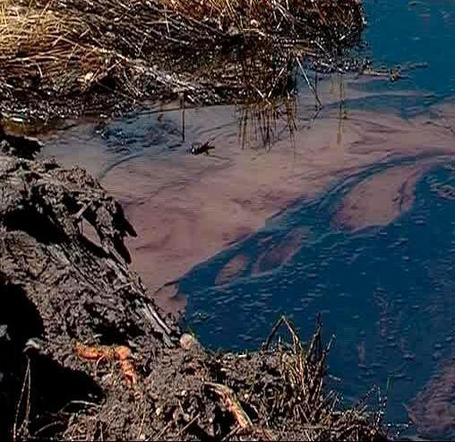 Оценка экологических рисков                                                                             - Фото №3