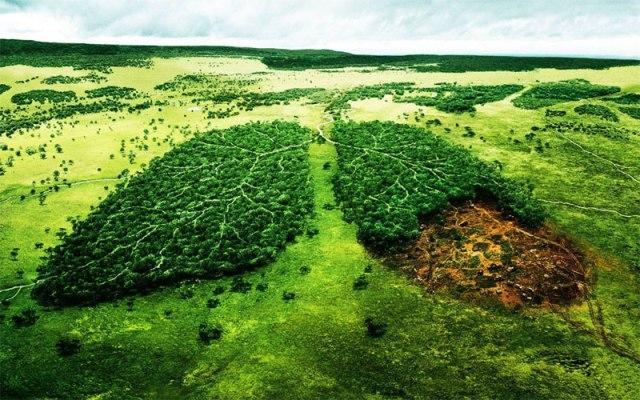 Разработка материалов оценки воздействия на окружающую среду (ОВОС)