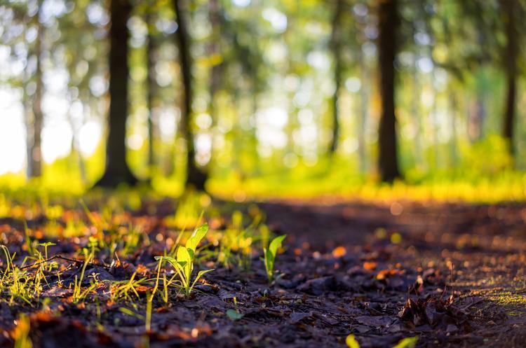 Стратегическая экологическая оценка (СЭО) - Фото №2