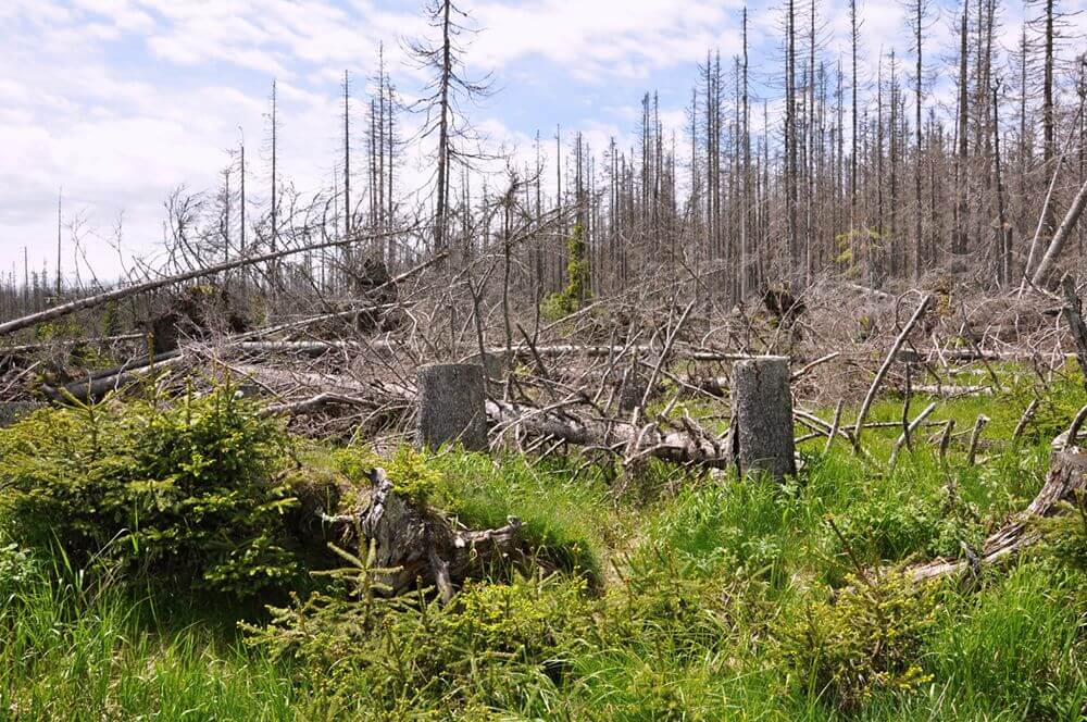 Оцінка можливого збитку від забруднень, юридичний та екологічний супровід проведення робіт по усуненню забруднень                                                                             - Фото №19